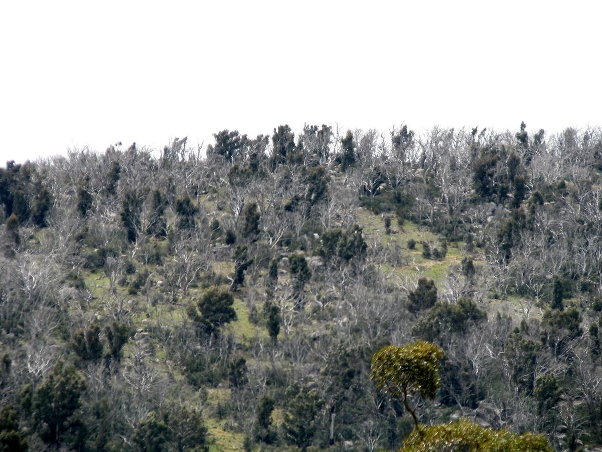 verde ithaca lp670 4