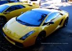 Lamborghini   Bull Run - Lamborghini Club SA: IMG 2384