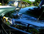 Classic Adelaide 2007 - BEA Car Show - Rymill Park: IMG 6443