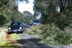 Drive to Mitchelton Winery - 5 Sept 2010: tree waz356 1