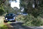 Drive to Mitchelton Winery - 5 Sept 2010: tree waz356 2