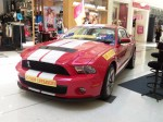 Gold   Car Shows: Shelby Mustang